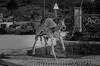 Donkey Cork 1544 (_Rjc9666_) Tags: algarve art artwork bw burro cachopo cork cortiça donkey esculture nikond5100 portugal street tamrom2470f28 urbanphotography ©ruijorge9666 faro pt 2088 1544