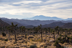 Layers of Joshua Tree (isaac.borrego) Tags: california joshuatree nationalpark desert
