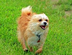Running Free (shelshots) Tags: dog rescue love