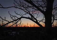 A sunset seen through branches (makkus1996) Tags: sun sunset sky cloud blue orange dark wood branch nature canon photography