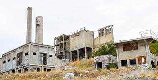 Abandoned Plant