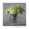 Cueillette de la journée (Gérard Boisnard) Tags: nature fleurs flore flowers primevères bouquet cueillette boisnard