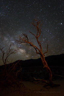 Mesquite Tree and Milky Way