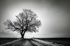 One Way One Tree (der-ernst) Tags: bw bnw blackandwhite black white tree landscape fineart minimal fog foggy mist misty sunrise landscapes longexposure myfavoritetree trees nature outdoor