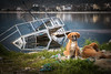 It wasn't me (The Frustrated Photog (Anthony) ADPphotography) Tags: animalsbirdsinsects boat category decay dog kapidag ocaklar places transport travel turkey dogs puppies puppy sea water bay wreck sunken derelict mischief mischievous reflections coastline coast coastal outdoor canon70d canon canon1585mm
