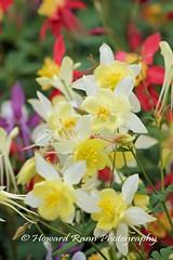 Longwood Gardens Spring 2017 (198) (Framemaker 2014) Tags: longwood gardens kennett square pennsylvania tulips united states america