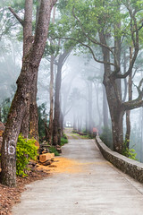 Into The Haunted Foggy Path (Mark Pilar) Tags: travel philippines baguiocity pi various nikon d3200 photoshoot photography travelphotography moment memory capture edit hiking walking positive life everday infamous outstanding amazing beautiful worthy bright lighting setting atmosphere chill adventure enjoy joy breathetaking breathe awesome surpreme nature love favorite flickr stroll out asian culture deep amazed naturelovers haunted ghost paranormal believe haunting creepy scary horror green naturelover trees tree bushes grass leaeves leaf leaves flowers places park road mist foggy fog forest woods