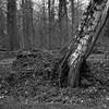 superikonta532009 (salparadise666) Tags: zeiss ikon super ikonta 53216 opton tessar 80mm fuji neopan acros vintage folding medium format analogue film camera nils volkmer 6x6 square bw black white monochrome landscape nature rural trees hannover region niedersachsen germany north german plains lowlands