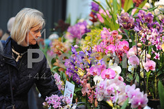 Beautiful Blooms at the 2018 RHS Orchid Show & Plant Fair, Royal Horticultural Halls, London, United Kingdom (cloudwalker_3) Tags: 2018 annual arrangement beautiful beauty bloom blooms botanical botany bush color colorful colour colourful competition cultivation design display displays england english exhibition flora floral flower flowerbed flowers fountains gardendesign gardening gardens grass green greenery horticultural horticulture image landscapes landscaping lawns leaf leaves leisure light london natural nature orchid orchids outdoor outside patios peaceful petals photo photograph pic picture plant plants ponds pretty rhs royalhorticulturalhalls royalhorticulturalsociety shows spring topiary trees uk unitedkingdom wildflowers wood