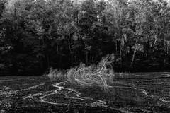 Melting trees (gambajo) Tags: 1year1town1lens brühl blackandwhite blackwhite black white public outdoors nature landscape water lake pond trees x100s fujix100s fujifilmx100s see natur landschaft wasser