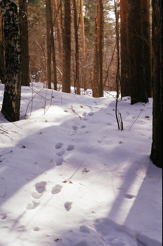 фото: Заячьи следы в парке Маяковского