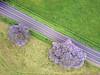 DJI_0257 copy (Aaron Lynton) Tags: jacaranda dji djimavic maui hawaii upcountry purps purple