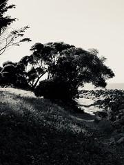 Romantic Tree (Melinda Stuart) Tags: trees tree monochrome silvertone apple effect silhouette park eastbay midday romantic htmt bay waterfront path trail romance shadow crown