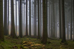 Magic Moments (*SanM.*) Tags: trees winter fog bäume nebel nebulous neblig forrest wood woodlands nature roodtlesell luxembourg