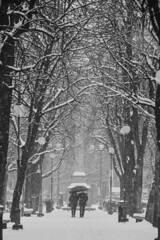 Tra alberi di neve - Among snow trees. (sinetempore) Tags: traalberidineve amongsnowtrees pavia neve snow freddo cold inverno winter alberi trees coppia couple biancoenero blackandwhite vialegiacomomatteottipavia fiocchi di snowflakes