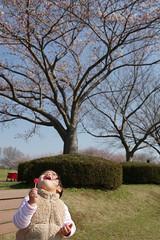 IMGP2329 (sirochan.kanta) Tags: sirochan kanta gr richo pentax kp sigma 1835 tokyo japan child daughter cute girl face portrait snap candid