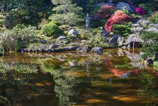 Morning glow at Hakone Gardens