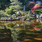 Morning glow at Hakone Gardens thumbnail