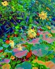 Garden whimsy.... (Sherrianne100) Tags: spring abstract colorful whimsical flowers