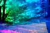 20180304-074 (sulamith.sallmann) Tags: pflanzen wetter analogeffekt baum blur botanik bunt bäume colorful dars deutschland effect effects effekt filter fischland folie folientechnik germany mecklenburgvorpommern miriquidi pflanze plants prerow schnee snow tree unscharf weather winter sulamithsallmann