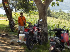 Indonesia-Java East Popoh 20171215_125234 DSCN0452 (CanadaGood) Tags: asia asean seasia indonesia indonesian java javanese eastjava jawatimur tulungagung popoh motorcycle people person tree corn agriculture canadagood 2017 thisdecade color colour