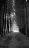 Path to light (Rosenthal Photography) Tags: rodinal15020°c11min landschaft bnw schwarzweiss anderlingen 35mm asa400 ff135 weg winter städte wald bw 20180201 olympus35rd analog ilfordhp5 dörfer siedlungen landscape nature mood february forest trees way path trail track pathway olympus olympus35 35rd fzuiko zuiko 40mm f17 ilford hp5 hp5plus redfilter filter red rodinal 150 epson v800