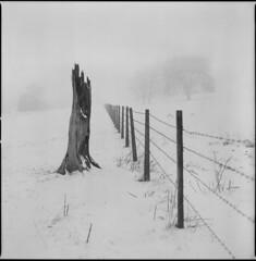 stumped (steve-jack) Tags: hasselblad 501cm 80mm cb ilford delta 400 id11 hertfordshire snow fence winter epson v500