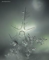 jmc_3460to3485snowflake1jsm (JayEssEmm) Tags: snowflake snowflakes massachusetts macro jsmcelvery mcelvery