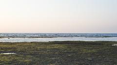 DSC_0397 (Aaron Gruenthal) Tags: nikond600 photography lightroom fade nature beach sunset adventure explore okinawa japan plants wildlife ocean sky blue flower sunabe