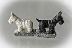 """Once Upon A Time"" (Kat-i) Tags: mondaymarch19th2018 macromondays blackandwhite dogs hunde schwarzweis makro ""onceuponatimenikon1 v1kat i katharina"