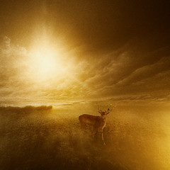 transition (lukas duran) Tags: fienart conceptual deer sun surrealism lukasduran flickr adobe photoshopä photoshop adobephotoshop