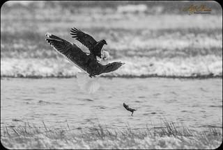 Pecking disorder