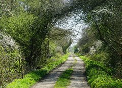 Spring Tunnel (JamieHaugh) Tags: clevedon northsomerset england uk gb greatbritain outdoors sony a6000 nature tunnel sunshine green countryside path track road lane trees day spring shadows ilce6000 zeiss