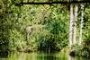 Lush Green (Balaji Photography - 4.8M views and Growing) Tags: travel kerala poovar backwaters joy pleasure green trees forest waterway reflection resort retreat summer vacation picnic boating beach