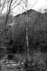 cavalier-2 (xtrice) Tags: haillicourt terrils escalier noiretblanc pasdecalais arbres ubuntu rawtherapee gimp