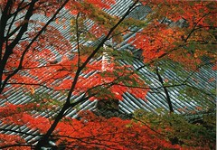 Colours in Autumn_Kyoto (Kogotok7) Tags: autumn foliage