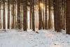 A Snow Scene (aMemoryCaptured) Tags: photographic desktop homekingslynnnorfolk kingslynn stevepalmerphoto astevepalmerphoto flikr dropbox amemorycaptured places walking other uk eastanglia norfolk snow southwootton england unitedkingdom gb