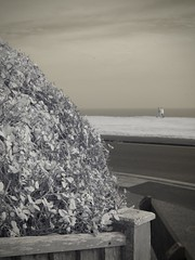 I.R first try. (awphoto3) Tags: ir infrared beach clifftop