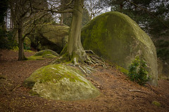 _MG_2939 (steve.geliot) Tags: moss roots rocks greensand sussex tree landscape