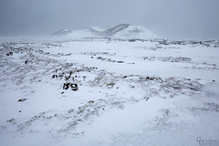 In the storm (Cristiana Damiano) Tags: iceland ice 2018 landscape icescape winter snow wind storm white lava rocks wwwcristianadamianocom cristianadamiano