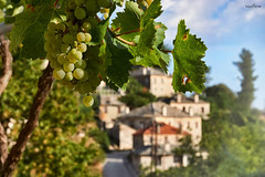 a beautiful day (dim.pagiantzas | photography) Tags: beautiful day light ambient grapes vineyard nature landscape road sky bluesky clouds trees village traditional greece hellas travel epirus colors colorfull morning