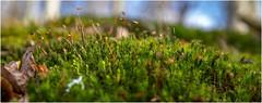 Spring . (:: Blende 22 ::) Tags: germany deutschland thüringen eichsfeld eic landkreiseichsfeld iberg forest wald spring springtime bäume trees gras lightshadow licht schatten canoneos5dmarkiv canoneosd ef2470mmf28liiusm