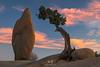Pink Sky (W9JIM) Tags: joshuatreenationalpark twentyninepalms california unitedstates w9jim jtnp 5d4 24105l canoneos5dmarkiv ef24105mmf4lisusm