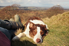 13/52 Trust (meg price) Tags: 52weeksfordogs flynn bordercollie rescuedog sheepdog dog pet relax nature littledoglaughedstories