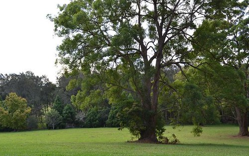 Lot 9 Rosemary Gardens, Macksville NSW