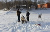 IMG_5913 (Slavik Terebov) Tags: cherepovets canon50200l winter snow canon70300 russia canon1740l street people dog canon6d