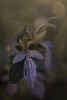 Olivilla. (Eugenio Albertus) Tags: flowers 80d luznatural macro planta arbusto blumen tessar2850 fleurs mediterráneo