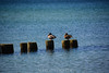 20180408 MARKGRAFENHEIDE (11).jpg (Marco Förster) Tags: dobermann hunde natur markgrafenheide ostsee strand frühling
