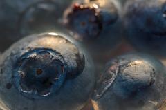 a flower in a circle (HMM !) (ralfkai41) Tags: makro heiidelbeeren kreis obst blaubeeren circles ball blueberries beere fruits gberry kugel macromondays