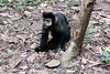 A monkey in the Argentinian National Park (adventurousness) Tags: cataratasdeiguazu cataratasdoiguacu iguacufalls iguassufalls iguazufalls argentina brasil brazil monkey